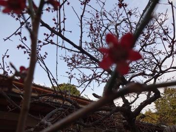 13.03.19春の花41