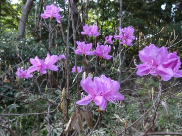 13.03.23春の花01
