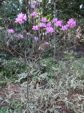 13.03.23春の花02