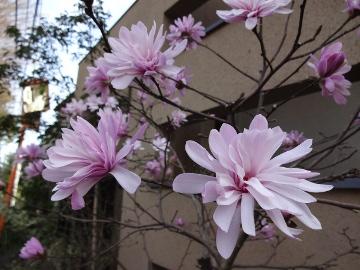 13.03.23春の花06