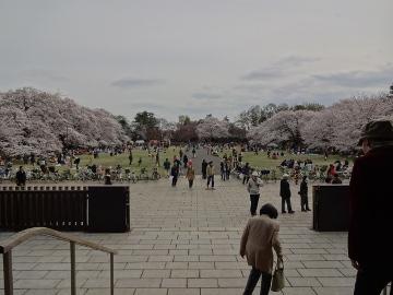 13.03.26小金井公園04