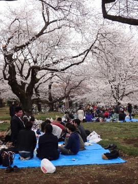 13.03.26小金井公園05