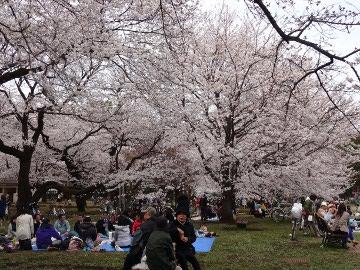 13.03.26小金井公園07