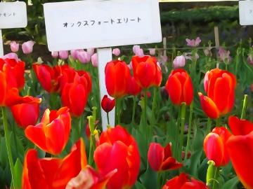 13.04.12撮影会116