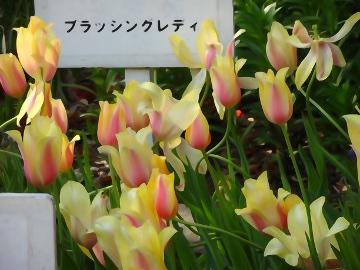 13.04.12撮影会153