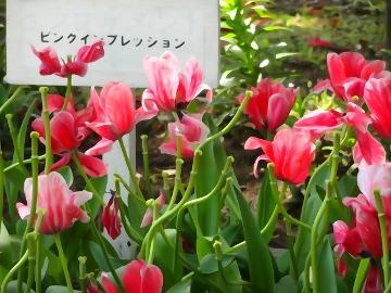 13.04.12撮影会159