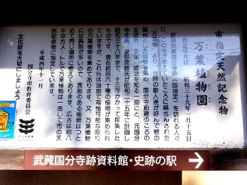 13.10.27野川25