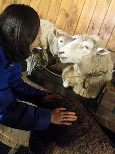 羊に笑いかけられた