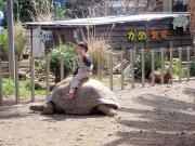 子供がゾウカメに乗ってます