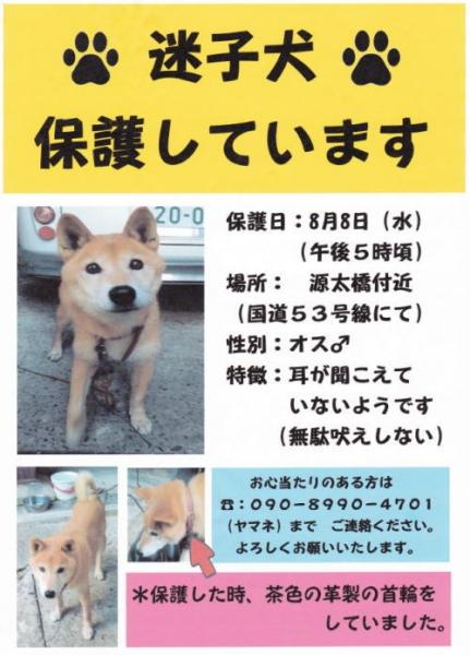 源太橋付近迷い犬.jpg