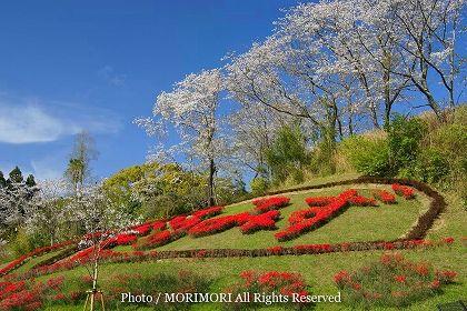 宮崎市 垂水公園の桜