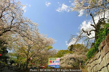 高鍋町 舞鶴公園の桜