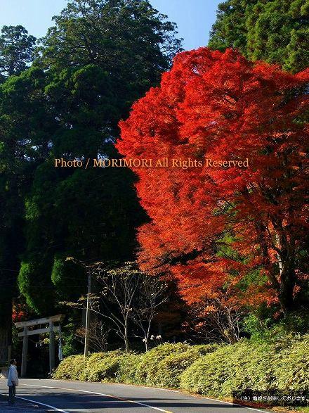 紅葉 白鳥神社 紅葉