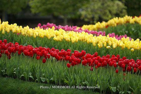 春のフローラル祭 チューリップ