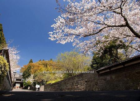 日南市飫肥城大手門前の桜