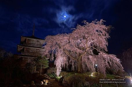 浄専寺のしだれ桜