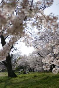 花見2008
