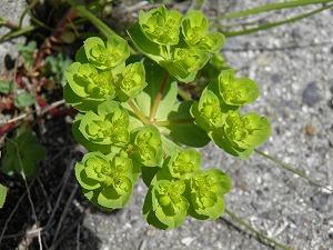 これは何の植物?