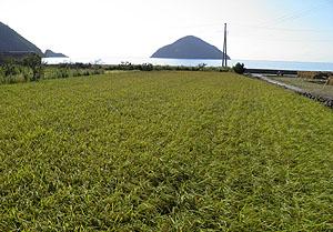 小祝島と実りの秋