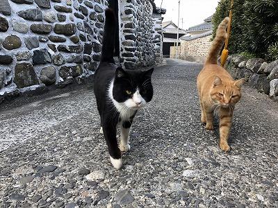 兄弟で散歩
