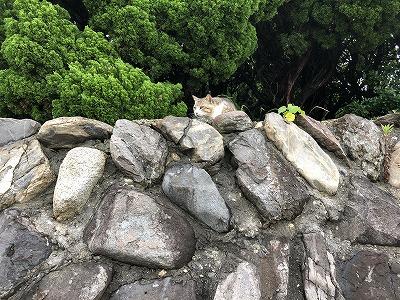 すいさんかのネコ