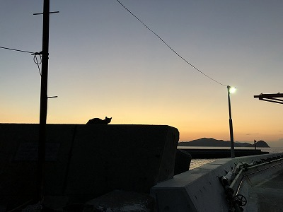 夜明けの島ネコ