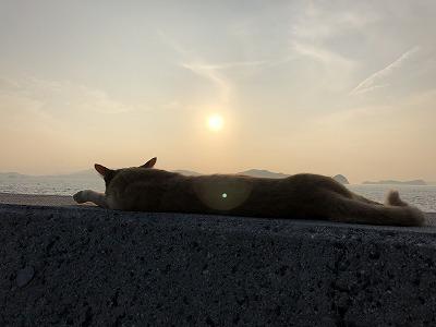 朝日とネコ