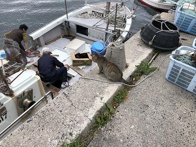 漁船と島ねこ