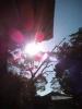 蓮の花みたい〜 綺麗な光ですう♪