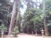パワースポット☆ 鹿島の森