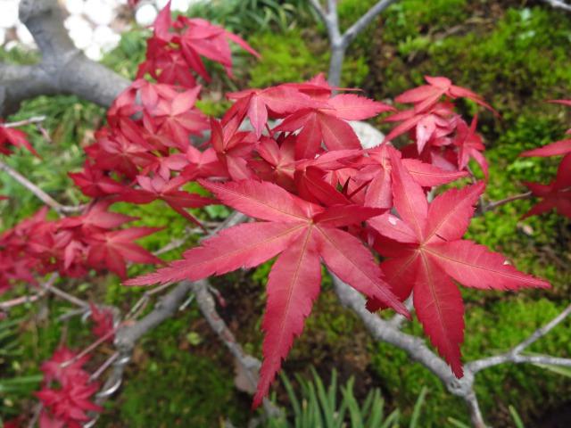 s_IMG_1640神代植物園6.jpg