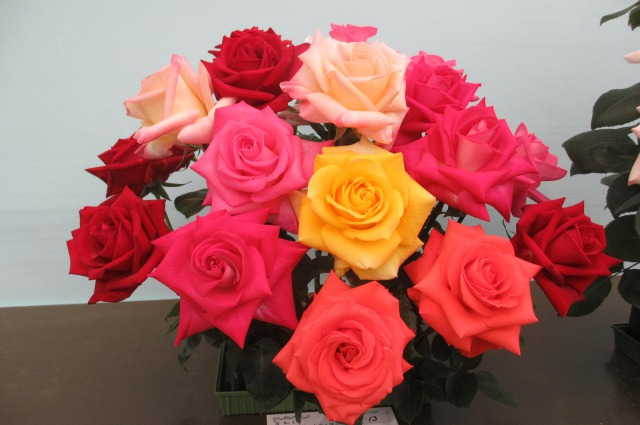 6s_IMG_4491国際バラ展ミックス.jpg