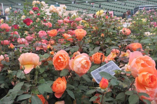 s_IMG_45618国際バラとガーデニング庭.jpg