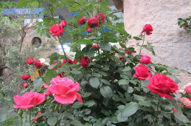 s_IMG_45938国際バラとガーデニング庭.jpg