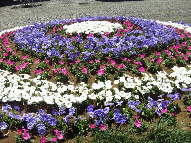 s_IMG_1844横浜花.jpg