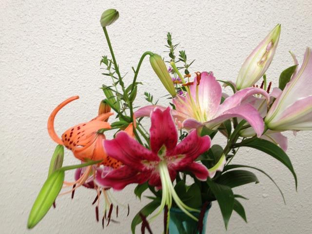 s_12IMG_7819家庭菜園7.jpg