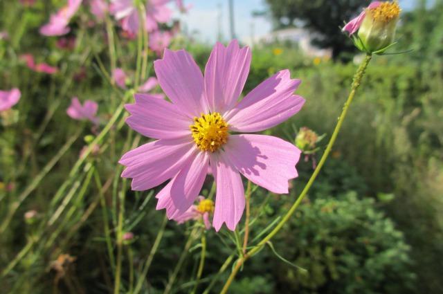 s_IMG_5288家の花2.jpg