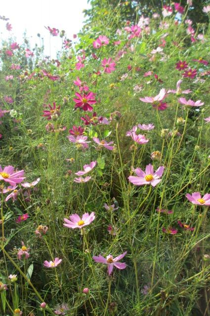 s_IMG_5289家の花3.jpg