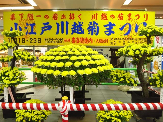 1s_2014-11-05%20001.jpg川越菊まつり.jpg