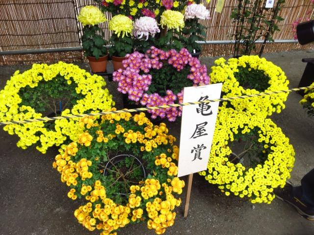 s_2014-11-05%20060.jpg川越菊まつり36.jpg