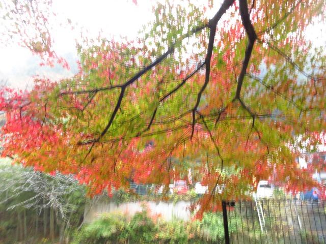 s_2014-11-12%20カーブス旅行(袋田の滝)%20034.jpg