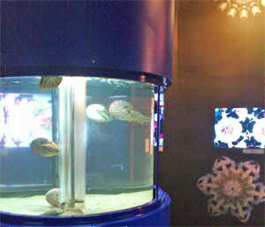 不思議いっぱい!貝たちの世界
