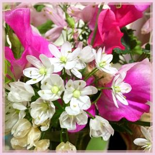 スクールも自宅も春の花で溢れております。幸せ(*^^*)