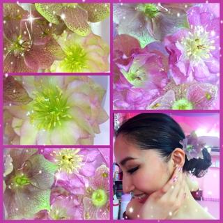 Kelaylaより美しいクリスマスローズの花を頂きました