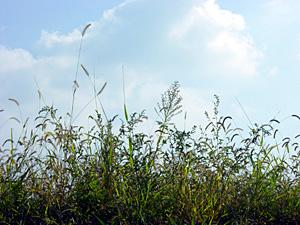 土手の雑草たち