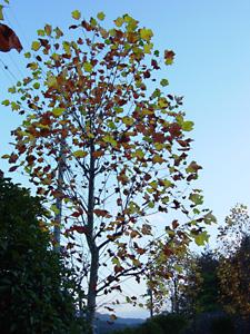 公園の木1