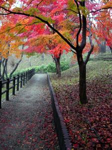 雨上がり 紅葉の錦