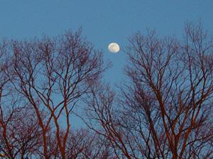 夕映えの木立