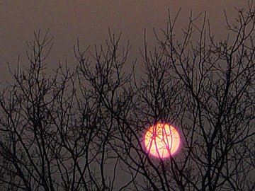 蛍光色の夕日