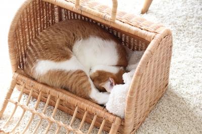 愛猫小花さん